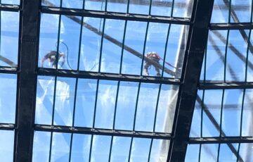 Murrayfield Stadium Roof Cleaning